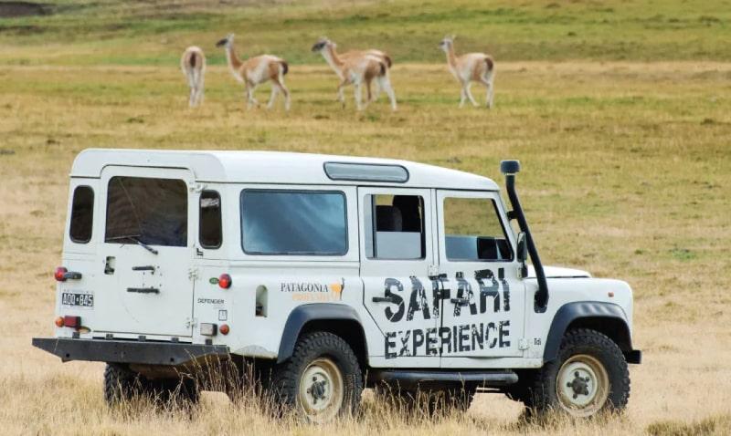 safari_experience_3-min